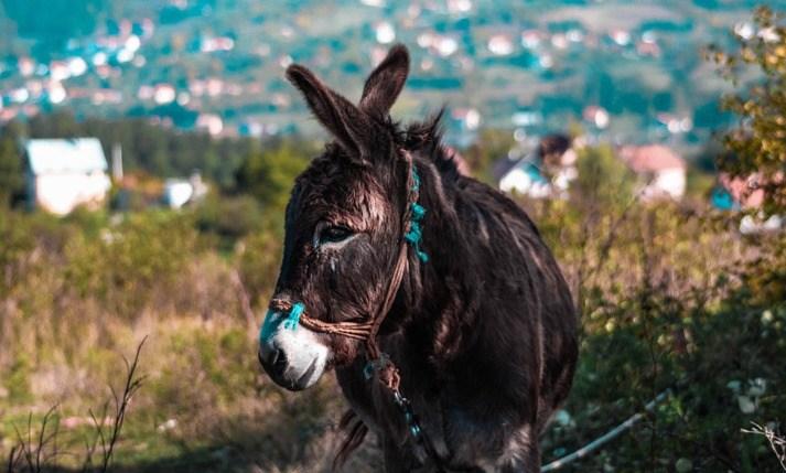 De ezel kende de weg en bracht de Bijbels de grens over.