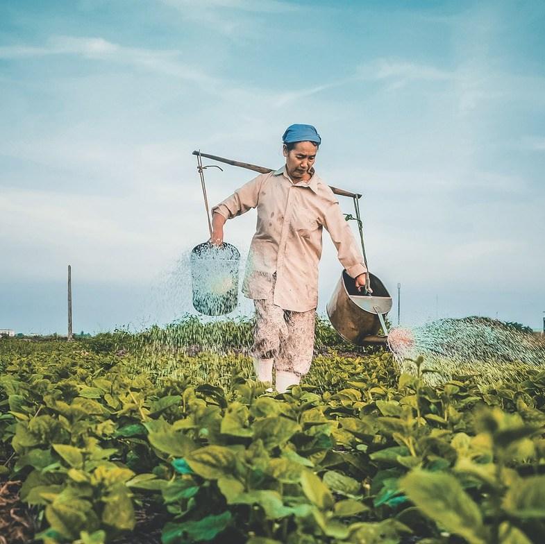 Stockfoto: een Vietnamese vrouw bewerkt het land.